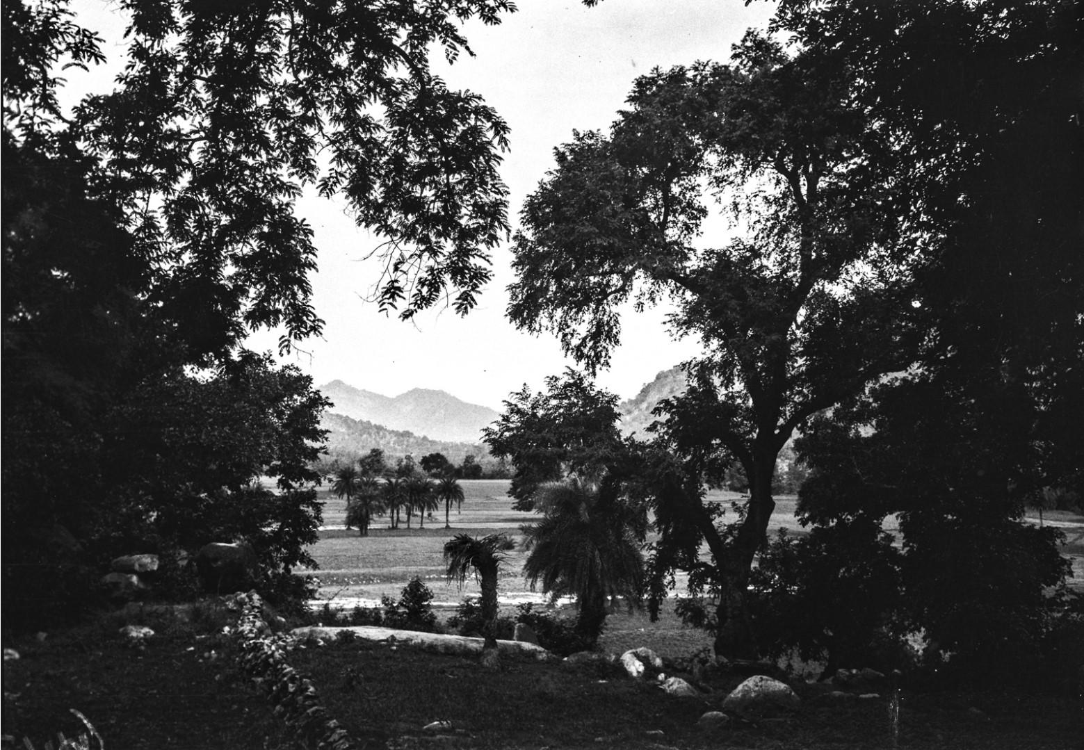 709. Орисса. Субтропический пейзаж с пальмами и рисовыми полями