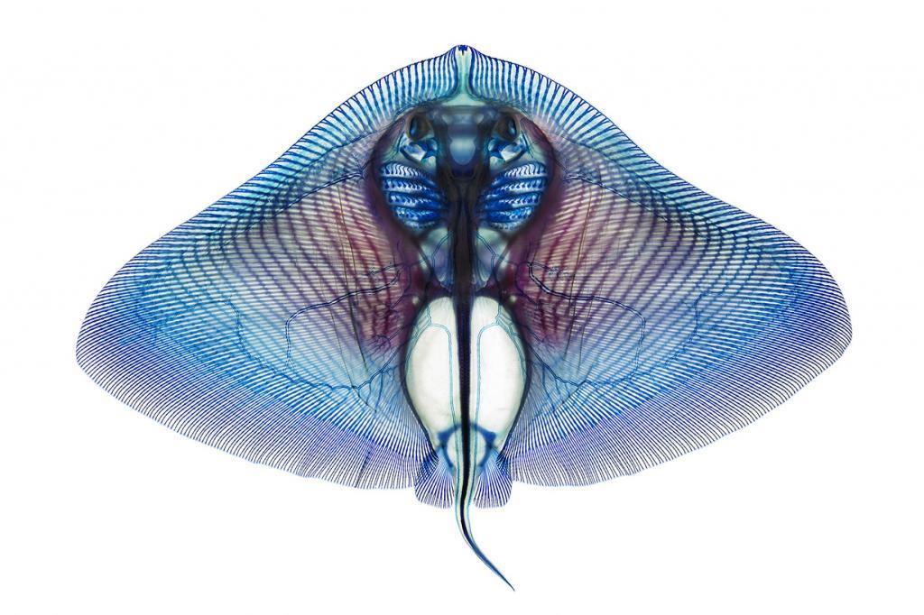 Водные животные на просвет