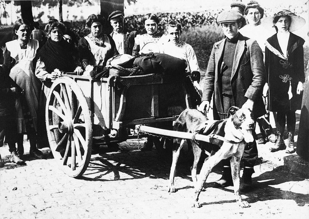 Австралийские войска на верблюдах, 1917 год. (Фото Australian official photographs/State Library of