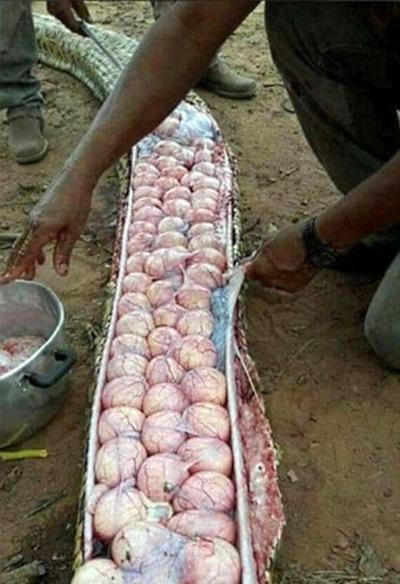 Фермеры, убившие змею, решили похвастаться снимком добычи в соцсетях. Фото вызвало большой резонанс