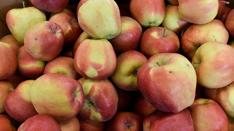 Беларусь  наращивает импорт продуктов изЕС вРФ