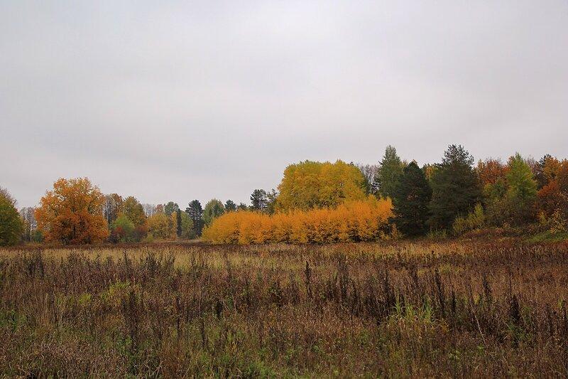 Жёлтая листва осенних деревьев и пожухлая трава заливных лугов и дубрав на косах по Кирово-Чепецком