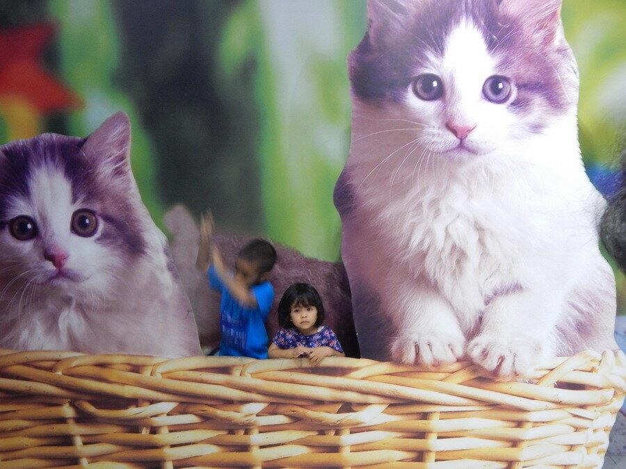 Девочка с кошками