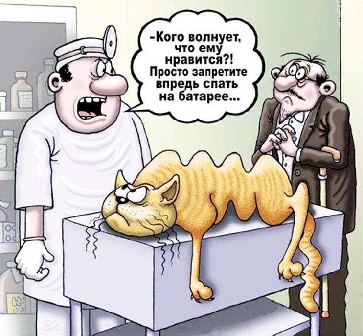 Ветеринарный юмор картинки