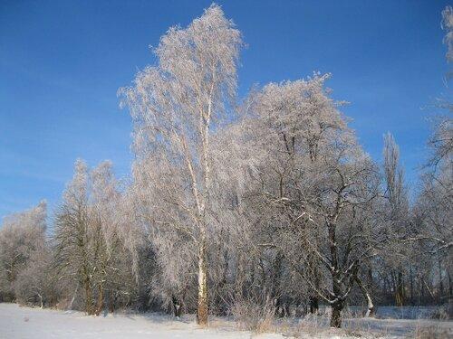 Морозным днем