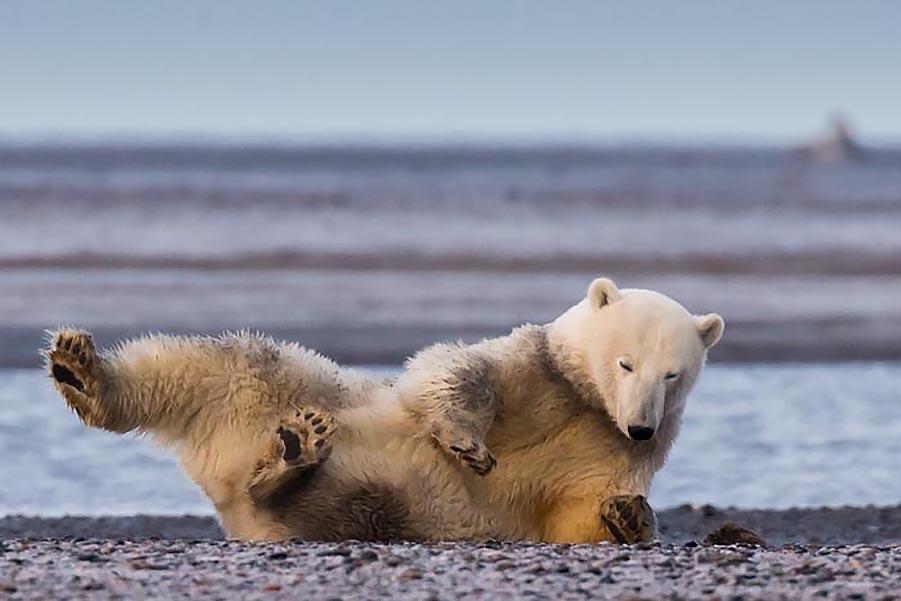 Бедные медведи...:(
