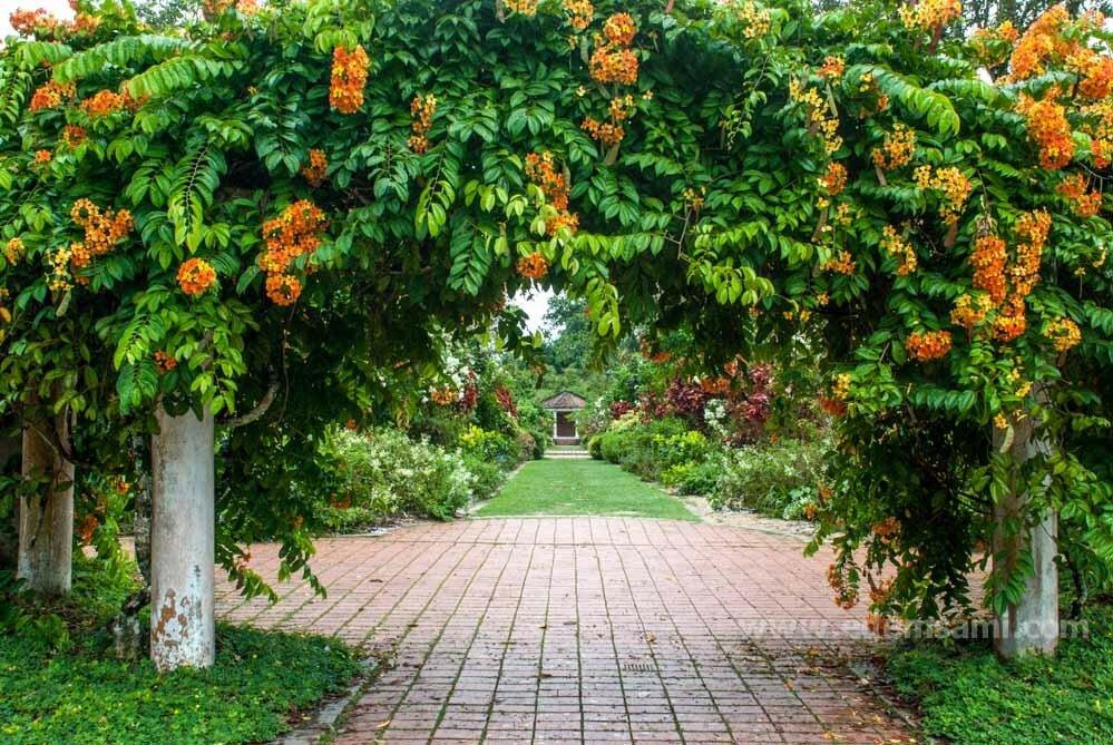 Ботанический сад на Пенанге