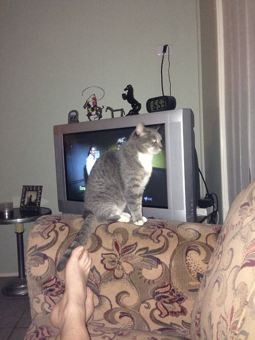 Кошки всегда находят странные но уютные места (37 фото)