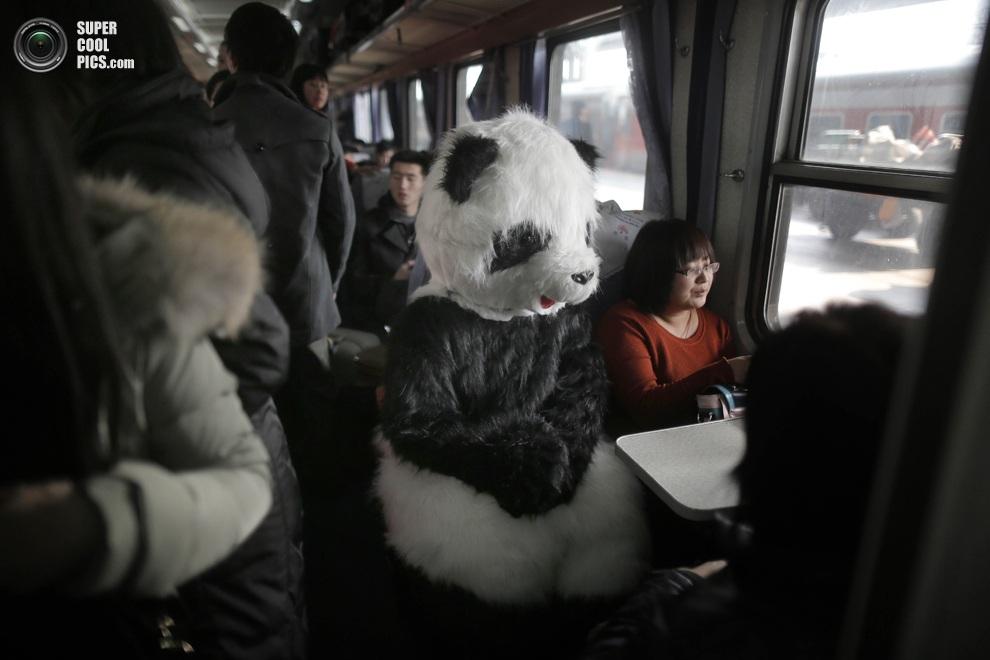 Женщина в костюме панды едет домой из Пекина в Цанчжоу.(STRINGER/AFP/Getty Images)