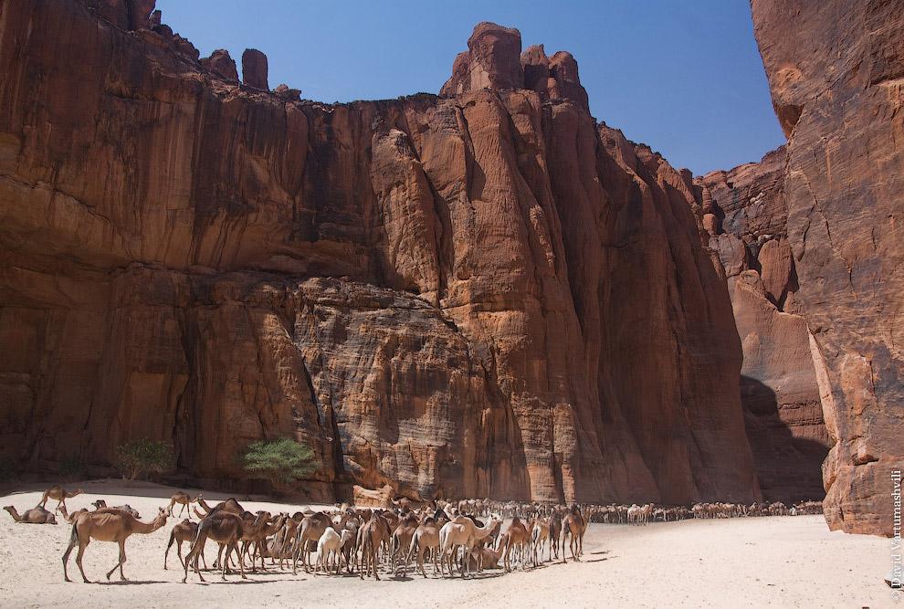 Подойти к воде с этой стороны существенно проще, верблюды за сотни лет утоптали дорогу до идеально р