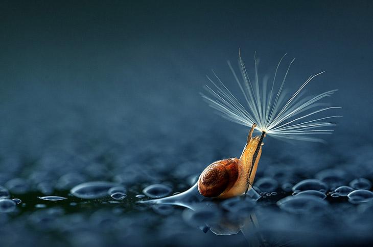 1. Можно под цветом. (Фото Fahmi Bhs):