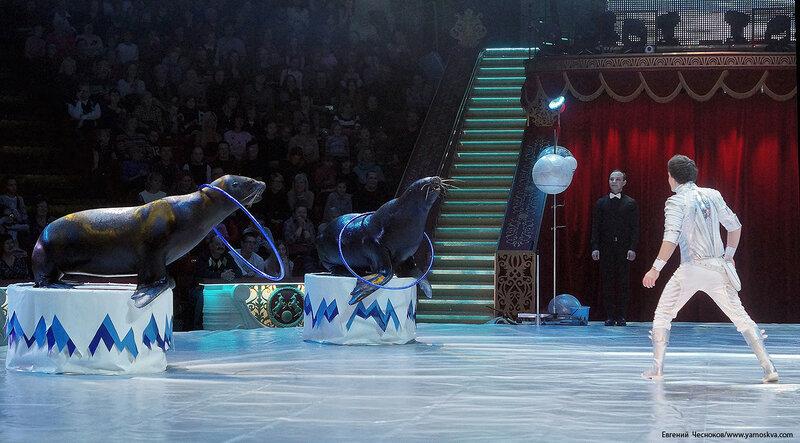 Цирк Никулина. Магия цирка. 21.02.17.53.Тимченко..jpg