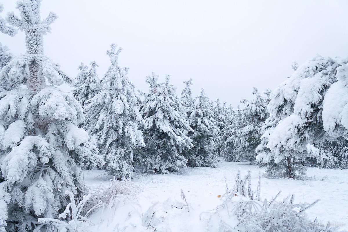 зима иней кумысная поляна саратов фото 9