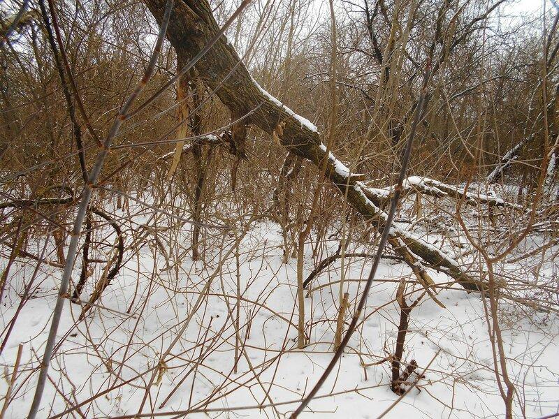 Снежность предновогоднего леса ... DSCN0882.JPG
