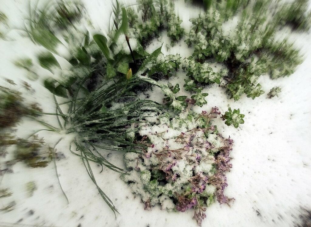 Снежный апокалипсис в мае