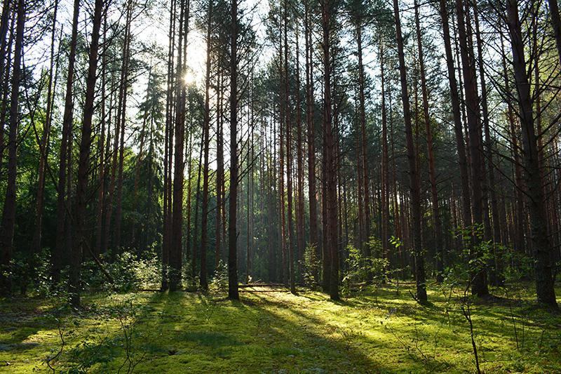 леса 27.jpg