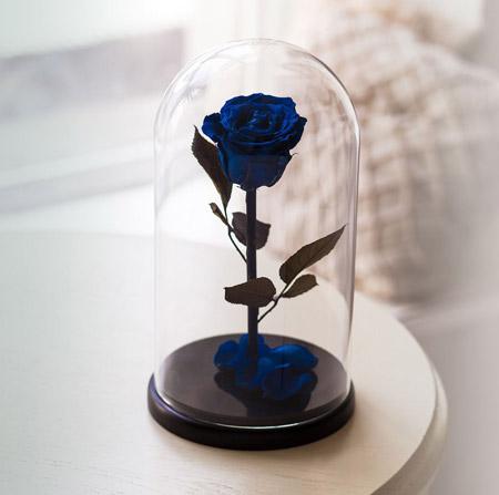 роза под куполом