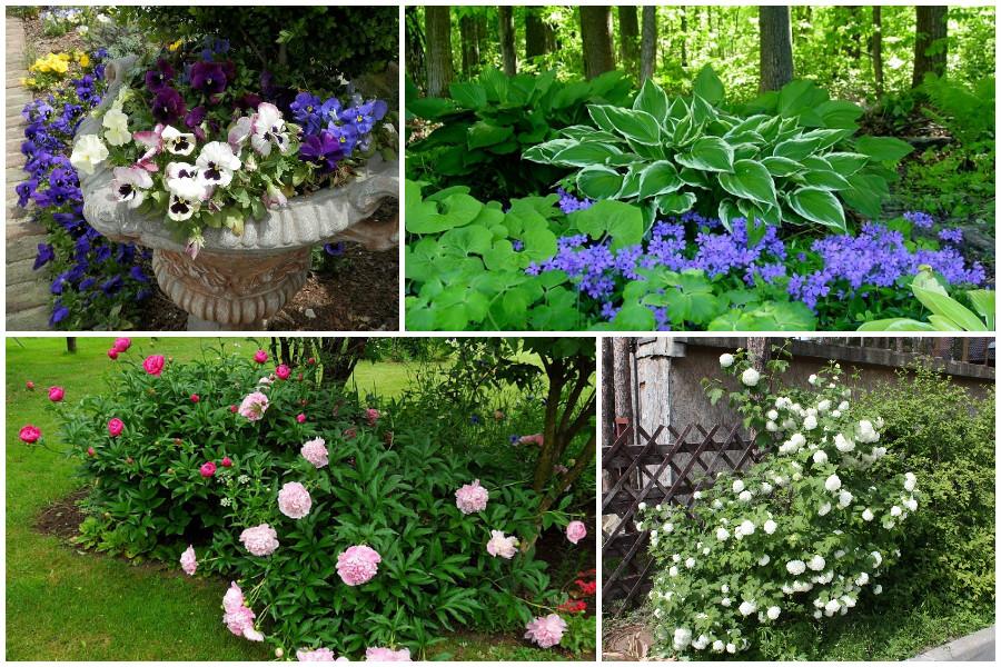 12 Многолетников для цветников, не требующие ухода