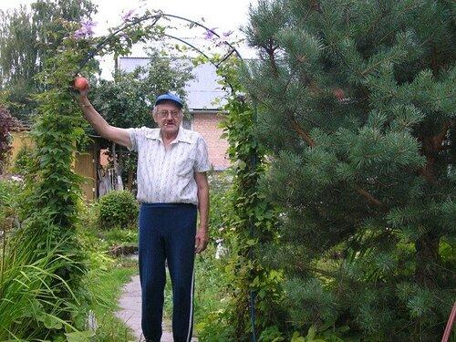 P1010212 Володя собирает яблоки с сосны..jpg