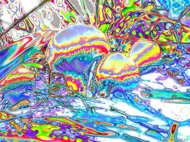 Разноцветная дикость