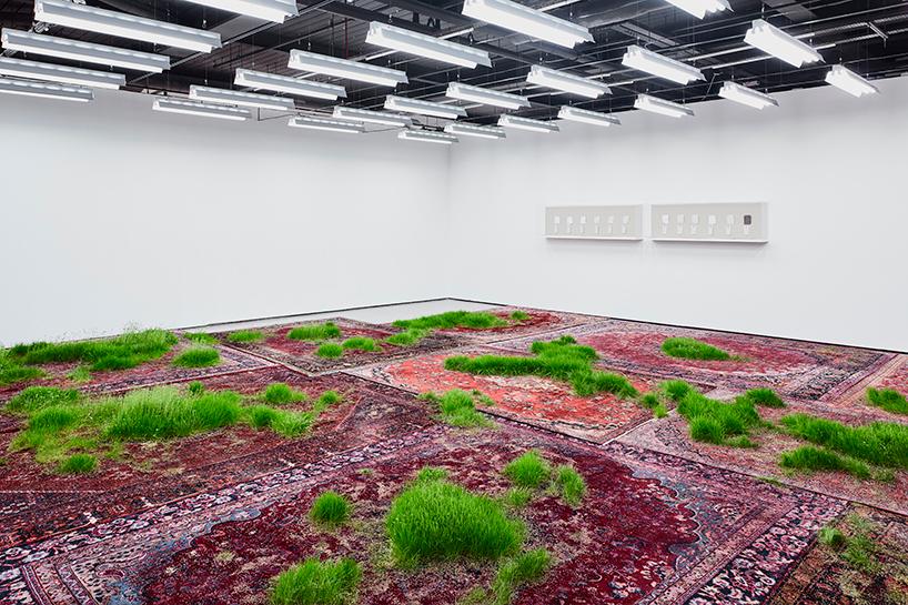 Трава проросшая сквозь персидские ковры (7 фото)