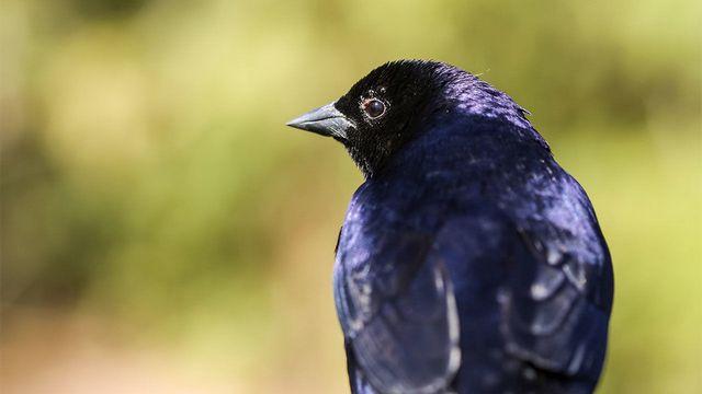 спрей от паразитов для птиц