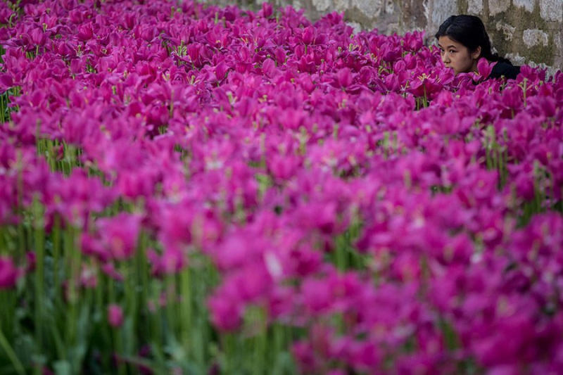 A young girl is seen among a bed of tulips in bloom in the Sultanahmet district in Istanbul, Tur