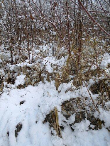 Начало Зимы, в походе, Природы снежное убранство ... DSCN0311.JPG