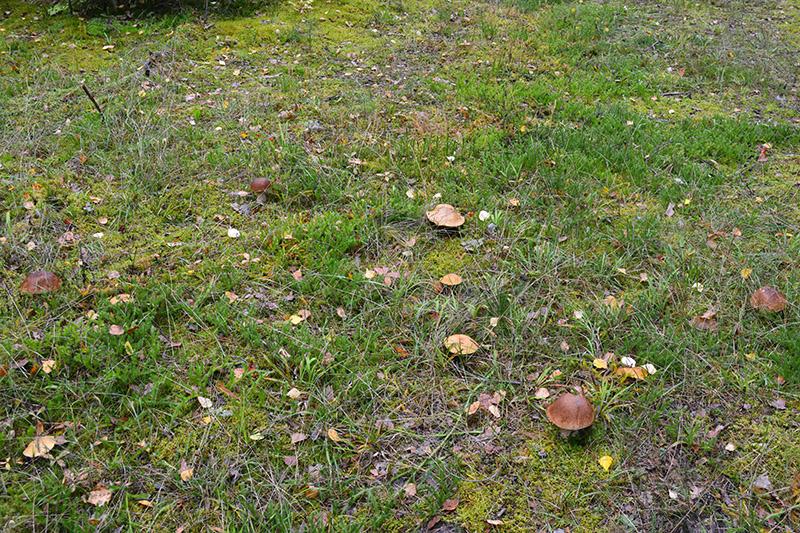 грибной мир 16 28.jpg