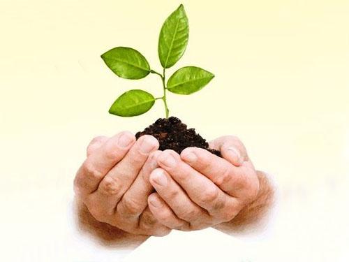 14 мая – Всероссийский День посадки леса!
