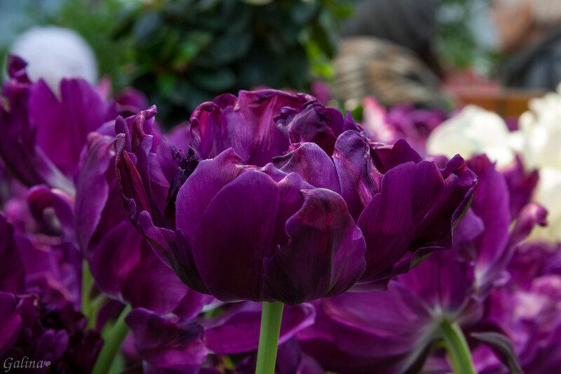 Фиолетовое настроение