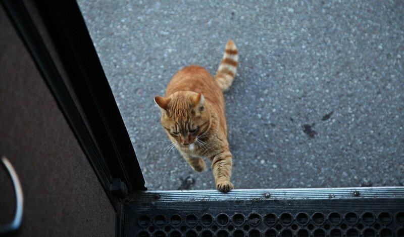 Рыжий кот в Восточной Пруссии