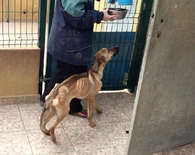 Активисты по защите прав животных, которые спасли собаку, считают, что ей всего 10 месяцев отроду, и