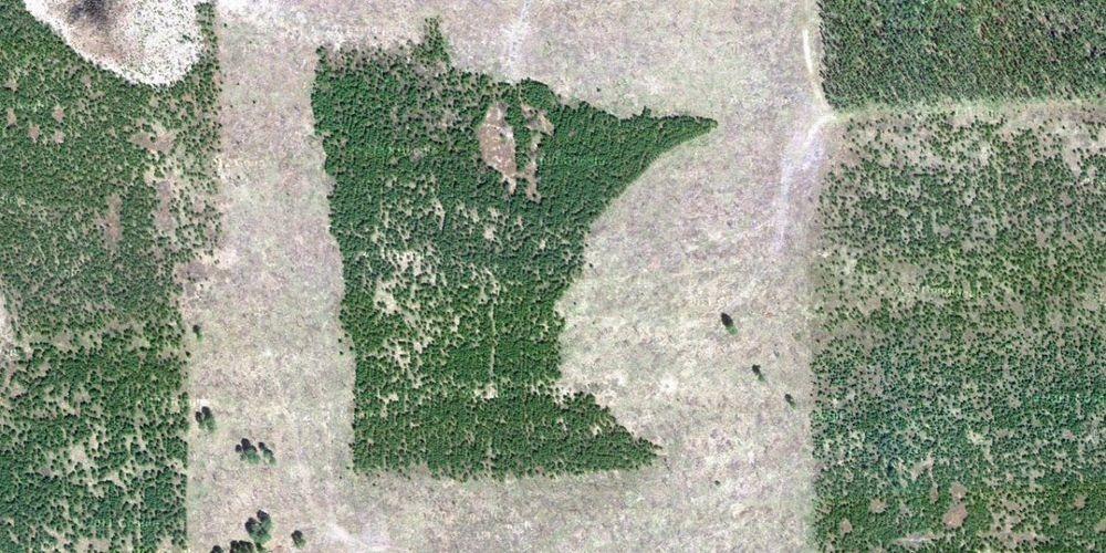 В середине 90-х лесничему из штата Миннесота поручили определить участок леса под вырубку. Тот, воор