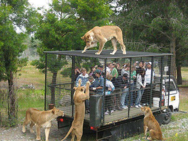 Ожидания и реальность: 19 забавных случаев, когда поход в зоопарк накрылся медным тазом. (16 фото)