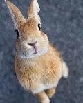 okunoshima-rabbit-island-japan-12.jpg