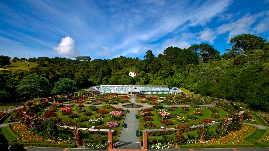 Wellington-Botanic-Garden-44094.jpg
