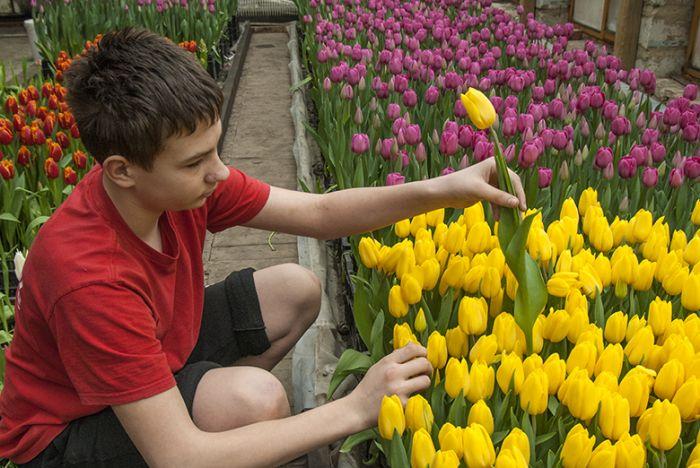 На крыше своего дома мужчина вырастил 8000 тюльпанов