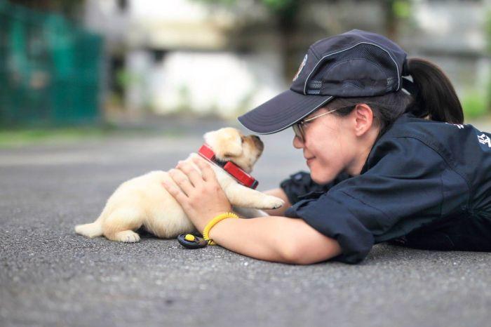 Новый сотрудник полиции Тайваня