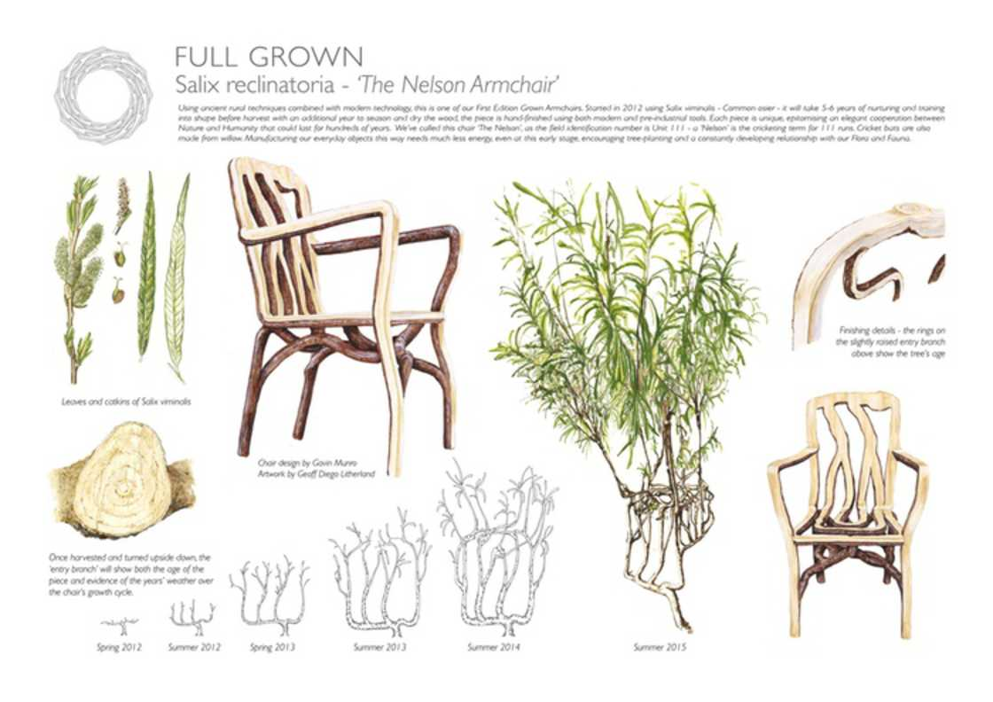 Full Grown - Growing chairs on trees