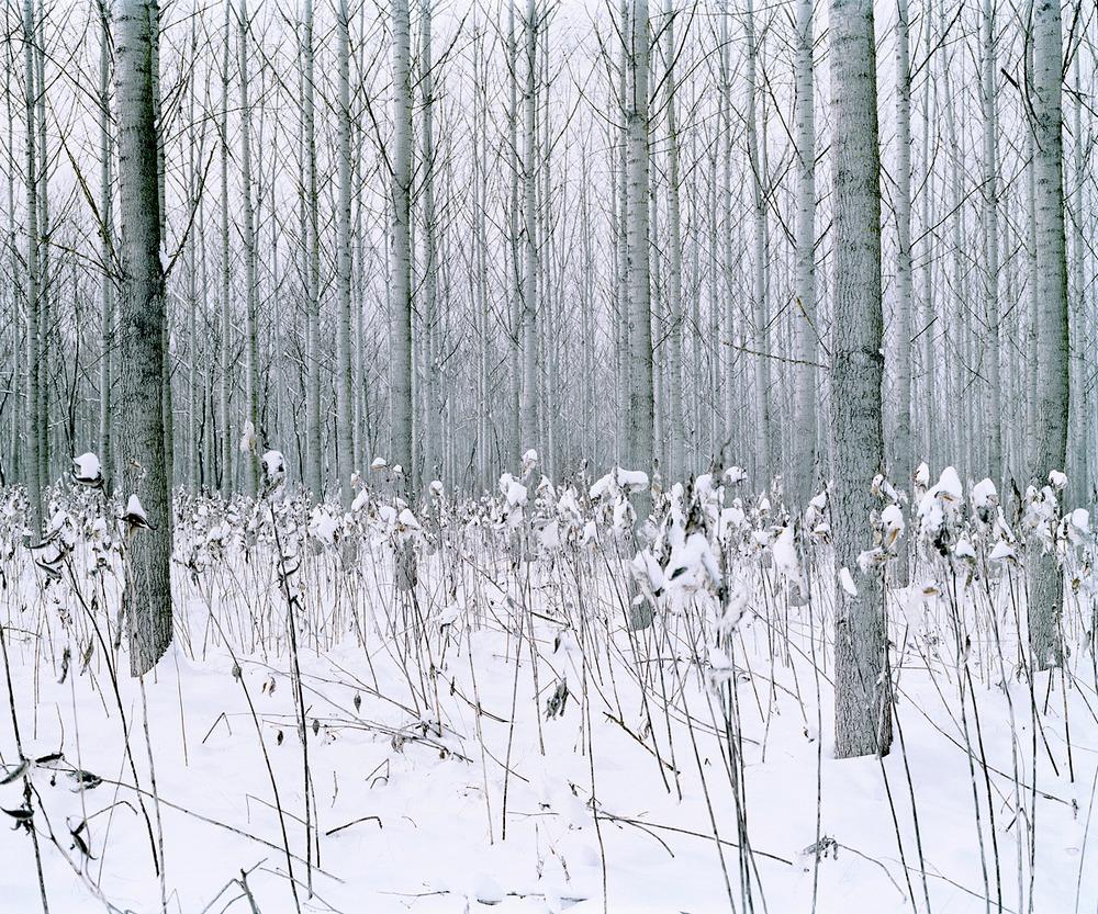 Даниэль Коваловский. Зелёная тишина.