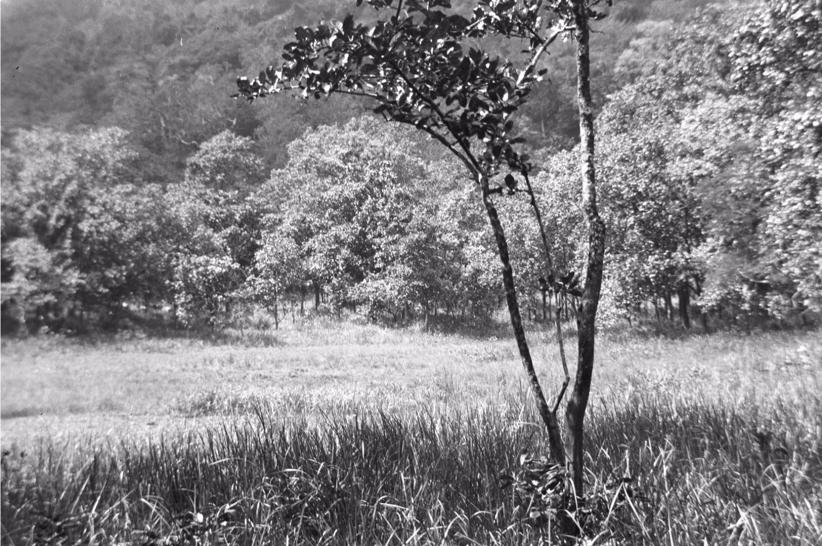 160. Вид поля в долине Дани-Гала