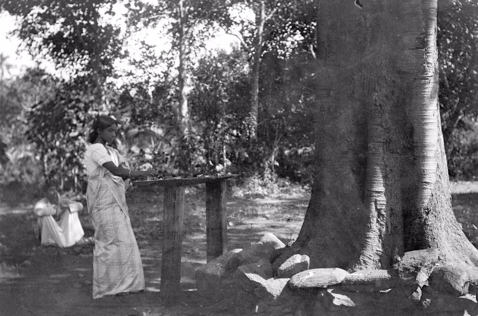 191. Окружной начальник с женой у священного дерева Бодхи в саду Валаувуa во время церемонии жертвоприношения