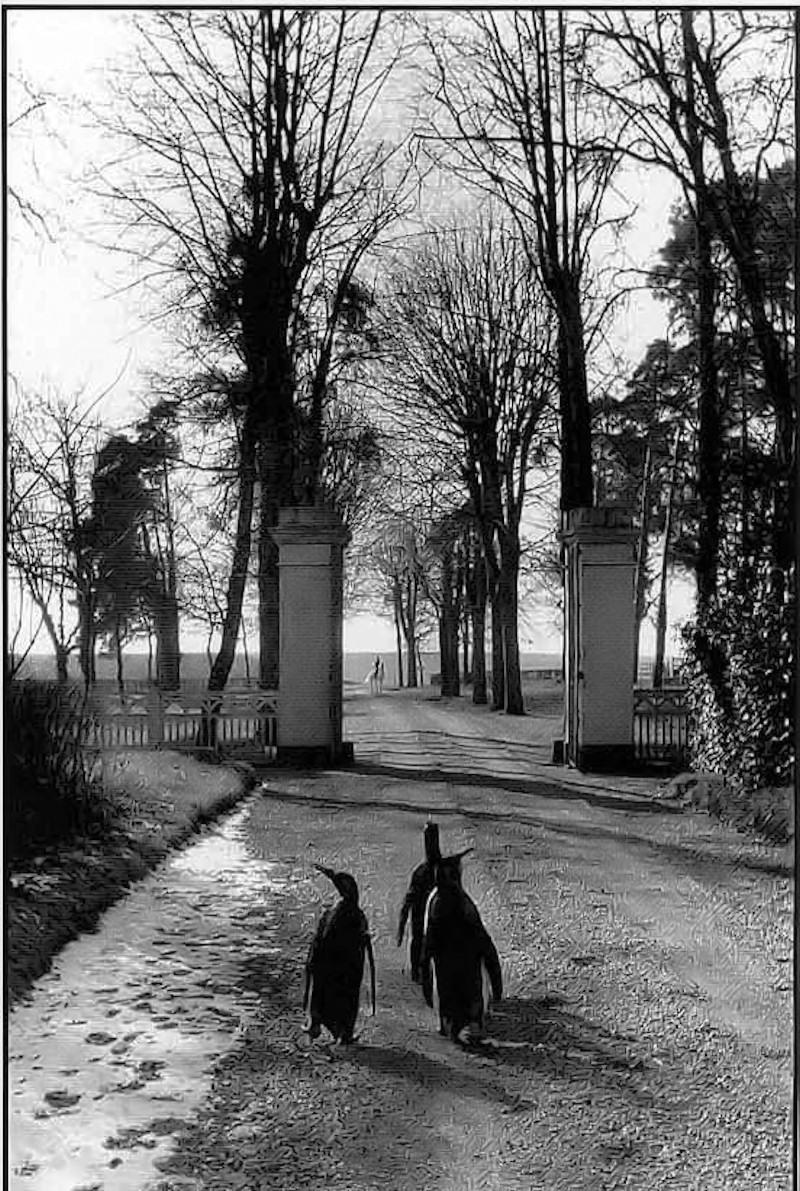 1950-е. Отдыхающие в Цирке Пиндер. Ницца