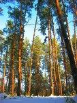 Лес и неба голубая вышина.