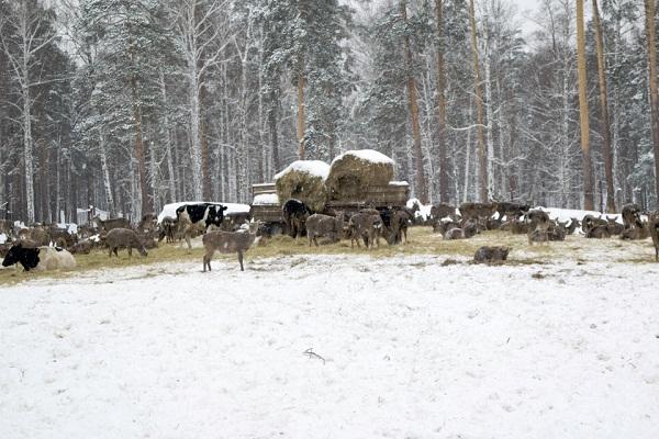 оленья ферма