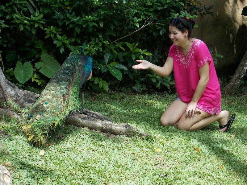 контактный зоопарк в Индонезии