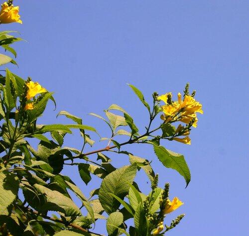 Инд цветы