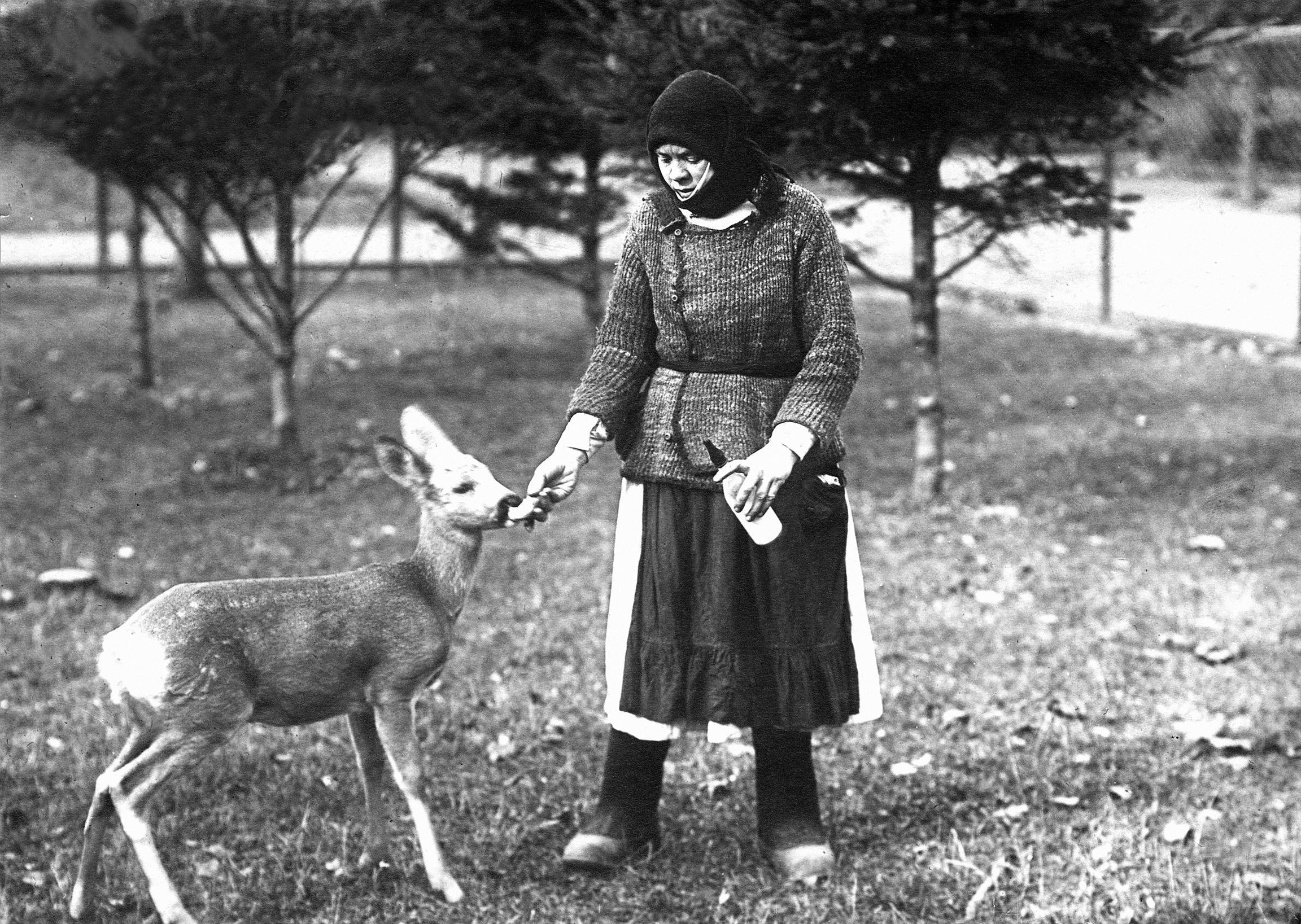 Вскармливание косули, 1920-е годы. Фото: архив Московского зоопарка.