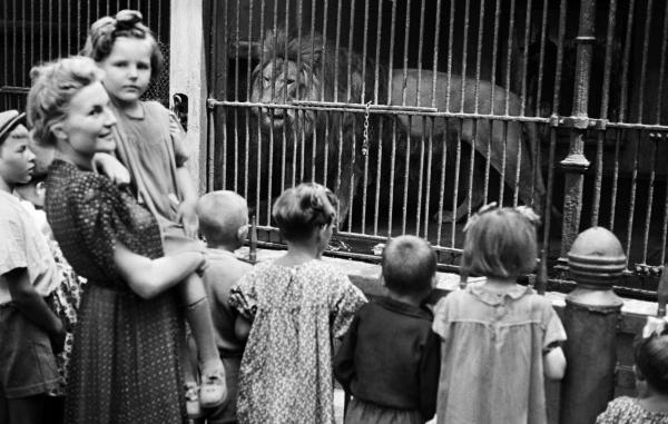 Посетители Московского зоопарка у вольера со львом, 1944 год. Фото: Анатолий Гаранин / РИА Новости.